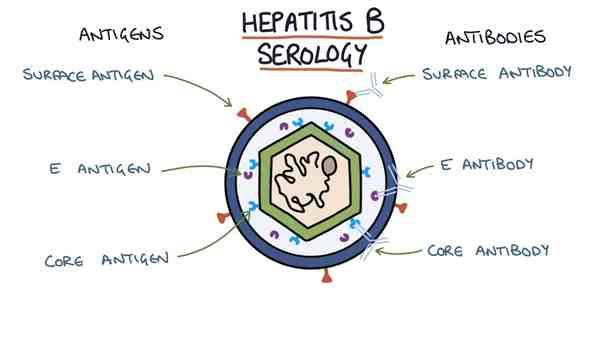 Analize pentru depistarea hepatitei virale B
